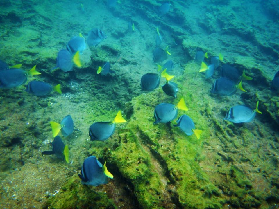 Galapagos Snorkeling At Bartolome Island Travel2unlimited