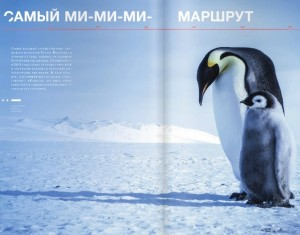 penguin article