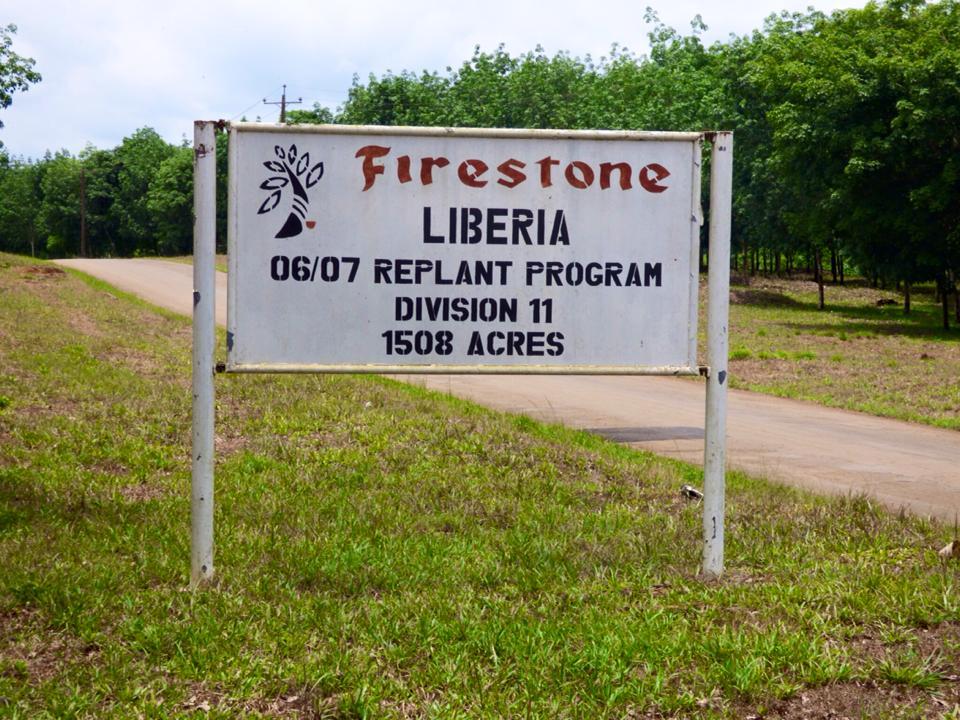 Liberia Firestone Rubber Tree Plantation Travel2unlimited